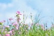 Detalii fotografie grass with pink flowers on summer meadow