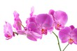 Detalii fotografie beautiful pink orchid isolated on a white background