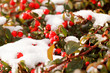 Dettagli della fotografia winter background with red gaultheria and snow