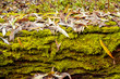 Detalii fotografie grunge autumn background  with green moss and leaves