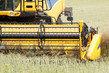 Image details yellow combine in summer harvesting rape on farmlad rural scene