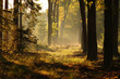 Detalii fotografie Autumn mysterious forest with fog