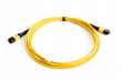 Detalii fotografie ribbon fiber optic patchcord with connector mtp isolated on white background
