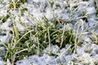 Detalii fotografie closeup of frozen crystals on grass blades with snow winter scene