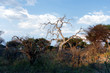 Detalii fotografie african landscape in national park nambwa on caprivi strip namibia