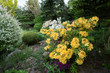 A fényképek részletei beautiful spring garden design with flowering rhododendron and conifers