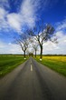 Detalii fotografie Spring. Avenue, road, landscape, fields, meadows and blue sky.