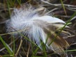 Image details Nature. Macro, feathers, grass, shape.