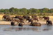 A fényképek részletei herd of african elephants drinking at a muddy waterhole hwankee national park botswana true wildlife photography