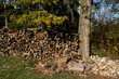 Detalii fotografie firewood in pile outdoor standing in grass at autumn