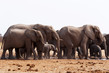 A fényképek részletei herd of african elephants drinking at a waterhole etosha national park ombika kunene namibia true wildlife photography