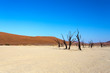 Dettagli della fotografia beautiful sunrise landscape of hidden dead vlei in namib desert with blue sky this is best place of namibia