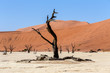Detalii fotografie beautiful sunrise landscape of hidden dead vlei in namib desert with blue sky this is best place of namibia