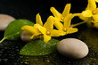 Detalii fotografie pebbles and yellow flower on black with water drops zen stone on black background spa tranquil scene concept with reflection