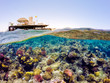Detalii fotografie underwater and surface split view in the tropics paradise with fish and coral reef above waterline beautiful view on pier on red sea egypt snorkeling vacation concept