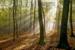 Detalii fotografie the suns rays shining through the trees in the forest on morning fog