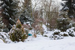 Detalii fotografie beautiful evergreen winter garden with conifers covered by fresh snow