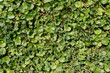 Detalii fotografie green summer grass and other plant texture for background use