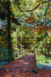 Detalii fotografie autumn in park landscape with fall colored trees and blue sky in sunny day pathway in forest