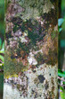 Detalii fotografie tree bark texture pattern for background or backdrop use madagascar tree