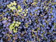 Dettagli della fotografia closeup of grapes clusters background