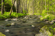 Detalii fotografie small mountain wild river valley in beautiful spring green colors picturesque landscape