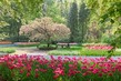 Dettagli della fotografia tranquil garden bench surrounded by cherry blossom trees