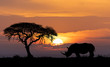A fényképek részletei typical african scenery silhouette of large acacia tree in the savanna plains with rhino rhinoceros africa wildlife and wilderness sunset concept