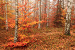 Detalii fotografie color autumn forest as nice natural background