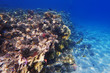 Detalii fotografie coral reef in egypt as nice natural landscape