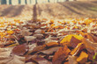 Detalii fotografie fallen leaves on the ground in the park in autumn for background or texture use natural autumn background