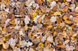 Detalii fotografie fallen leaves on the ground in the park in autumn for background or texture use natural fall concept autumn pattern background