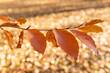 Detalii fotografie autumn fall leaves with shallow focus and blurry background fall in the park