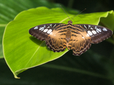 colourful tropical butterfly on a leaf