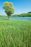 Mountain lake with green meadow