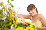 Gardening - woman cutting sunflower with pruning shears