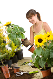 Gardening - smiling woman holding flower pot with sunflower