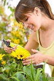 Gardening - woman sprinkling water on sunflower blossom