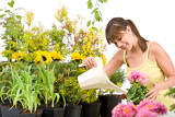 Gardening - woman with watering can and flowers pouring water