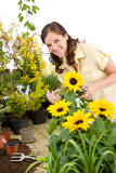 Gardening - woman cutting sunflowers and plants