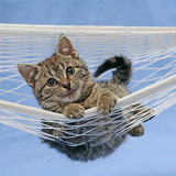 Photo cat in hammock