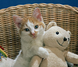 cat with the teddy bear