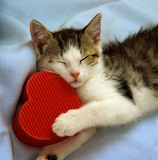 Fotografia cat with a heart box