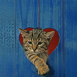cat in heart hole