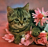 Fotografia cat with flowers