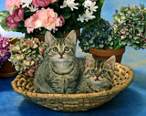 Fotografie two cats in a trug