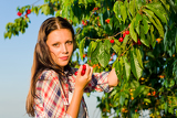 Fotografie Cherry tree harvest summer beautiful woman sunny