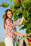 Cherry tree harvest summer beautiful woman sunny