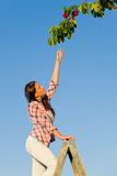 Fotografia Cherry tree woman reaching high branch summer