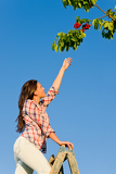 Fotografie Cherry tree woman reaching high branch summer